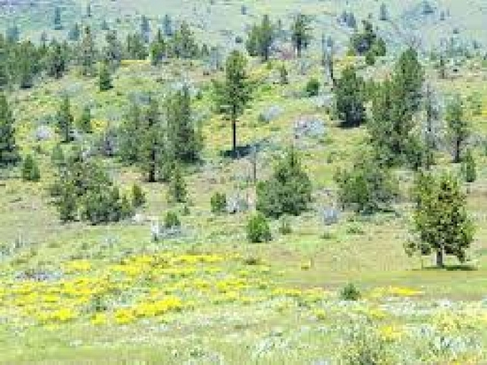 Gorgeous Northern California Property In Beautiful California Pines Subdivision!!! Just Bid & Take O
