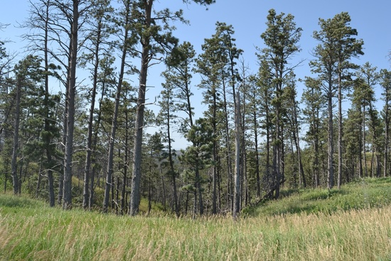Pine Ridge 33 – Chadron, NE