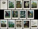 Oppenheimer Gardens Edition 'The Temple of Flora' by Robert John Thorton