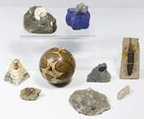 Natural History Assortment