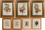 Botanical Print Assortment