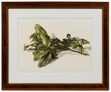 Jose d'Apice (Brazilian, b.1949) 'Bay Leaves from Laurel Tree' Colored Pencil on Paper