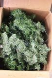 BOX LOT OF CHRISTMAS