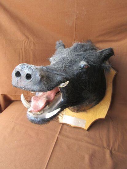 Boar head mount