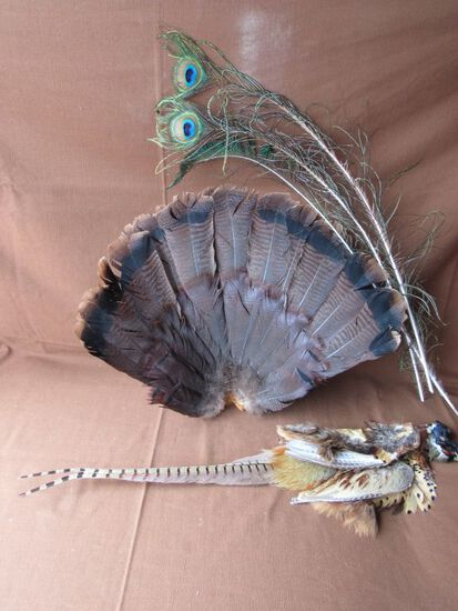 Feather lot