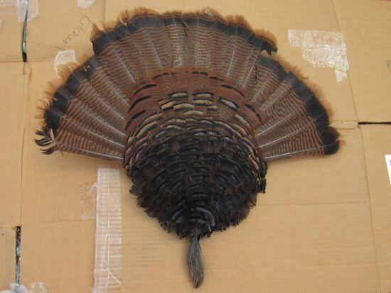 Turkey feather mount