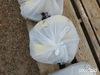 "Bag of (2) 2"" X 27' S-Line Straps"