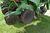 "John Deere 1750 Max Emerge Plus Conservation Planter, 6 Row 30"", Dry Fertilizer, Trash Cleaners, Mar Image 25"