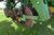 "John Deere 1750 Max Emerge Plus Conservation Planter, 6 Row 30"", Dry Fertilizer, Trash Cleaners, Mar Image 31"