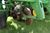 "John Deere 1750 Max Emerge Plus Conservation Planter, 6 Row 30"", Dry Fertilizer, Trash Cleaners, Mar Image 32"