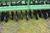 "John Deere 520 Drill, 20' 3 Pt., 10"" Spacings, Hydraulic Markers, Press Wheels, SN: 000926 Image 6"