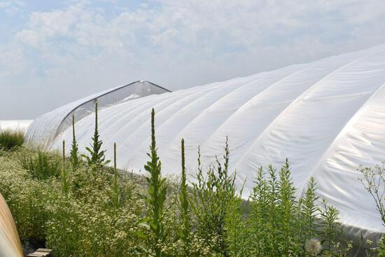 27'x96' hoop greenhouse with two fans, Buyers responsible for removal, must be removed