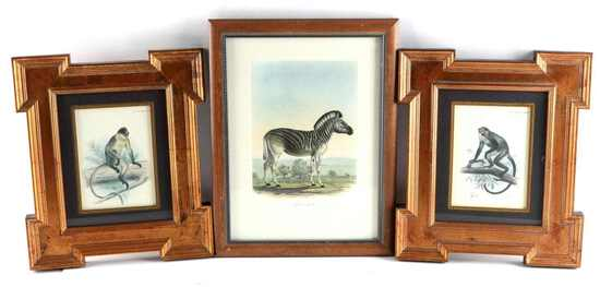 LOT ZOOMORPHIC LITHOGRAPHS 1893 & FREDERICK CUVIER