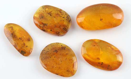 LOT OF 5 FOSSILIZED BALTIC AMBER WITH MOSQUITOES