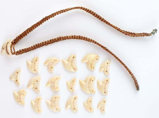 17 HOLED FOR PENDANT SHARK TEETH & 1 NECKLACE