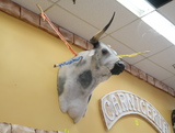 fiberglass bull trophy head