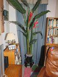 Artificial bird of paradise plant  8' H