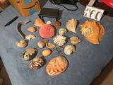 Top quality decorative seashells & coral with an alabaster egg & a pc of quartz