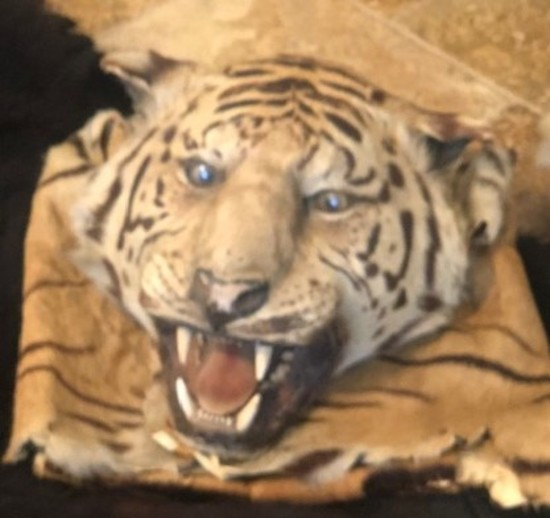 Tiger Head (Rug not attached)
