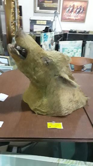 Wild Boar Mounted Head