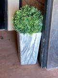 Plant and Plant Stand