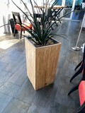 Plant in Plant Stand