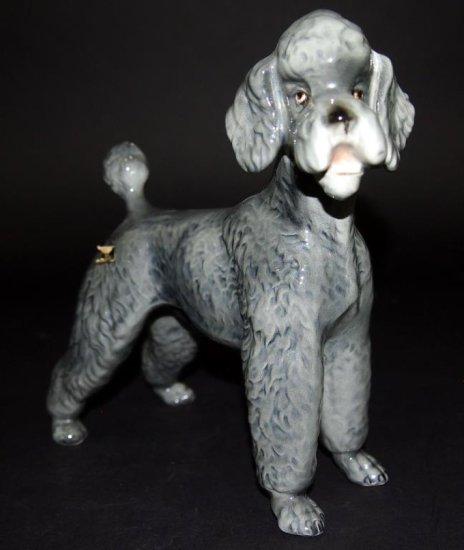 E&R Austria Poodle