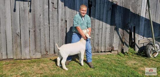 Market Goat / JR / Tag: 361 [Colton Lipscomb]