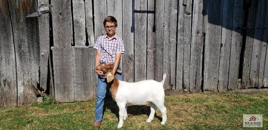 Market Goat / JR / Tag: 362 [Cohen Lipscomb]