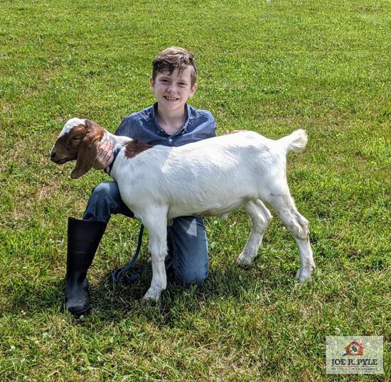 Market Goat / JR / Tag: 359 [Zayne Linn]