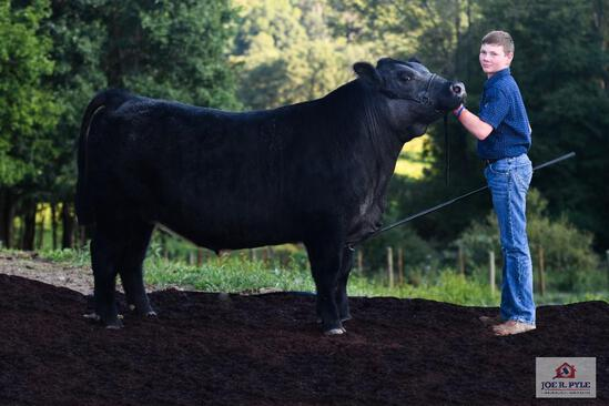 Exhibitor: CARSON STONE | STEER (MAINE X ANGUS) Tag: 14