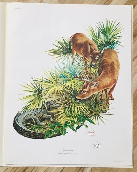 "1975 Richard Timm - FLORIDA KEY DEER - Signed - 22"" X 28"" ODOCOILEUS VIRGINIANUS CLAVIUM 152092"