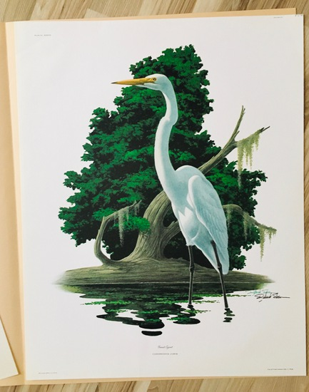 "1975 Richard Sloan - GREAT EGRET - Signed - 22"" x 28"" CASMERODIUS ALBUS 372795"