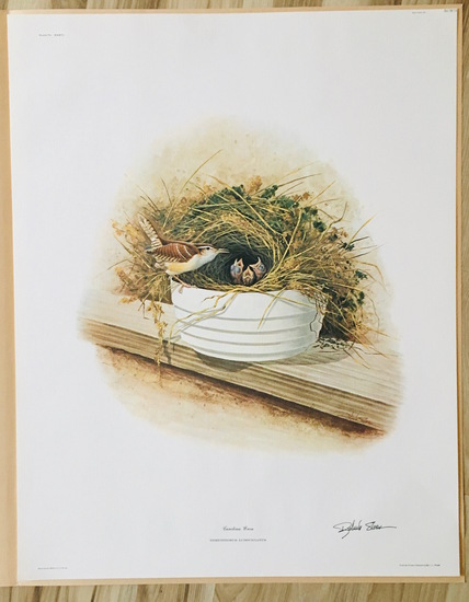 "1975 Richard Sloan - CAROLINA WREN- Signed - 22"" x 28"" THRYOTHORUS LUDOVICIANUS 361813"