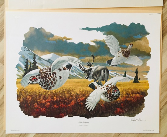 "1975 Richard Sloan - WILLOW PTARMIGAN - Signed - 22"" X 28"" LAGOPUS LAGOPUS  350910"