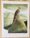 "1975 Richard Sloan - PRAIRIE FALCON - Signed - 22"" x 28"" FALCO MEXICANUS  333887"
