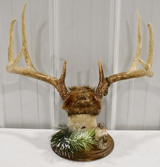 8-Point Deer Rack On Birch Wood Display