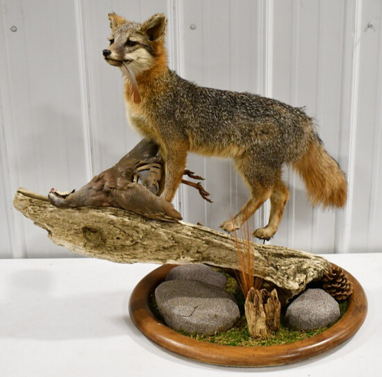 Full Body Grey Fox w/ Chukar Mount On Deluxe Base