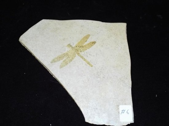 Fossil Dragon Fly