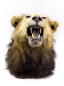Online Only Taxidermy and Collectible Auction