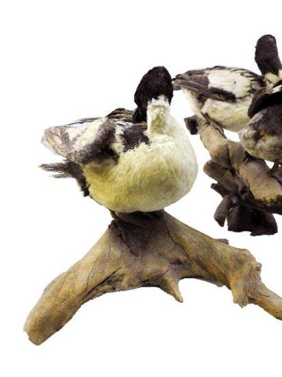 (2) Waterfowl Mounts w/ 7 Birds (Some Damage)