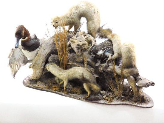 Wildlife Scene Mount (2) Teal, (4) Mongoose