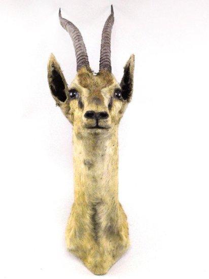 Gazelle Shoulder Mount