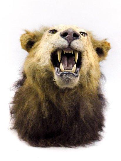Lion Head Mount