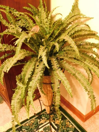 (2) Faux Plants, (1) Fern and (1) Ficus