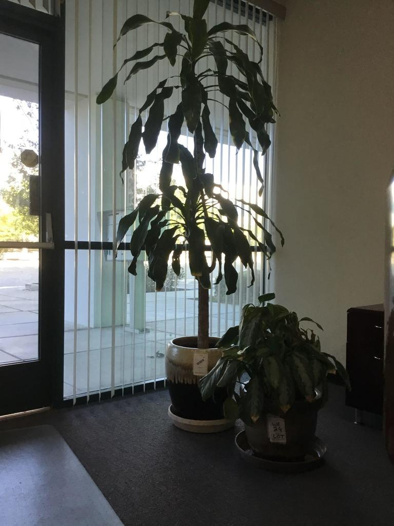 Lot of Assorted Decorative Plants