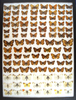 12 x 16 frame of Lycaenidae - Coppers, row 6-5 gynandromorph; pearl crescents & pieridae.