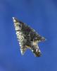 """7/8"""" Rose Springs Stemmed found near Butte falls Oregon. Ex. Matt Watkins collection."""