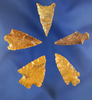 """Set of five assorted Columbia River arrowheads, largest is 1 3/16""""."""