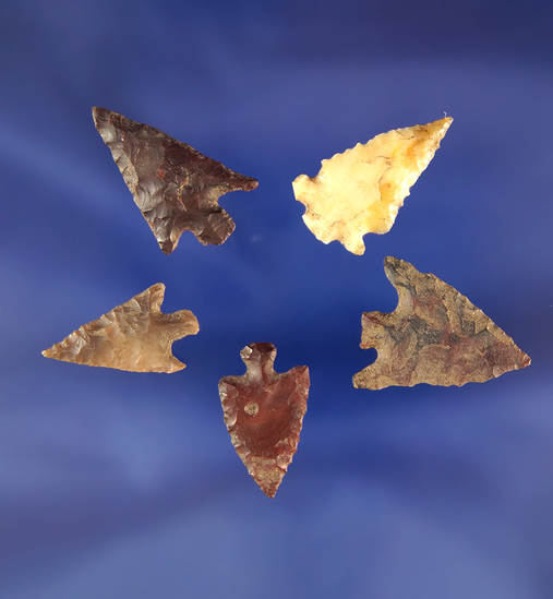 """Set of five assorted arrowheads found near the Columbia River, largest is 15/16""""."""